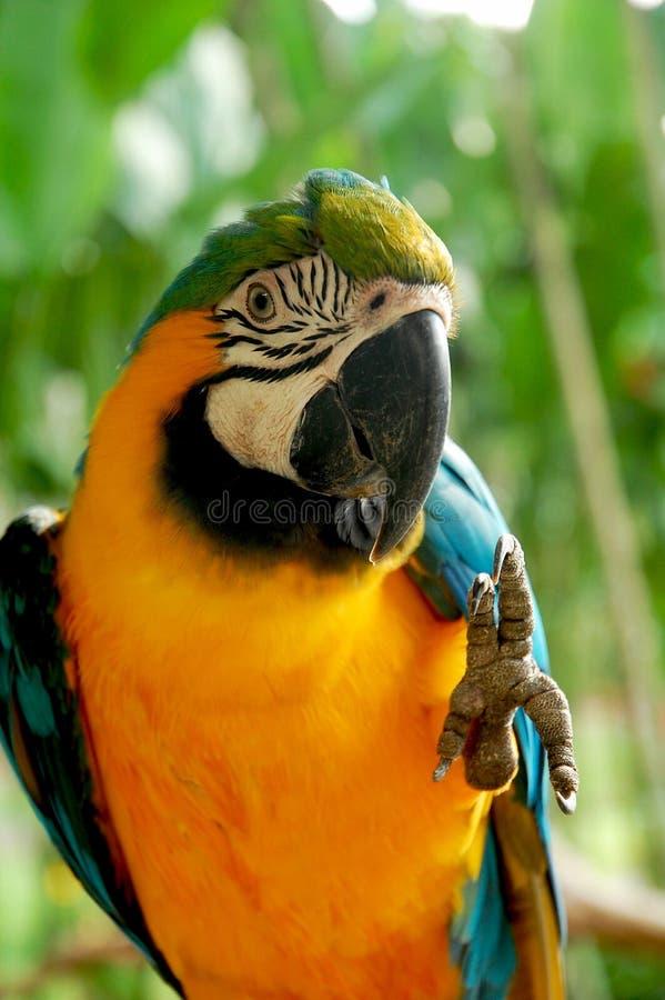 Uccello di pace fotografia stock libera da diritti
