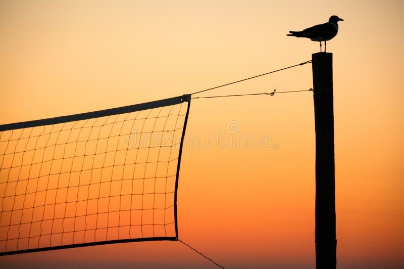Uccello di tramonto immagini stock libere da diritti