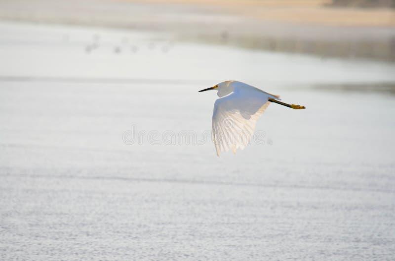 Uccello di volo, spiaggia di EL Espino fotografia stock