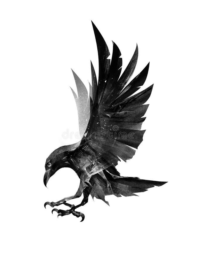 Uccello di volo tirato Raven dal lato su fondo bianco immagine stock libera da diritti