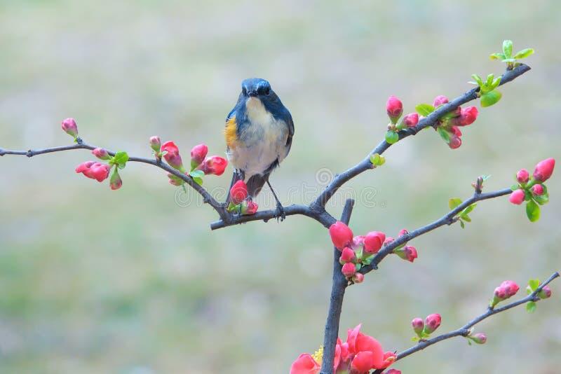 Uccello e fiore immagine stock