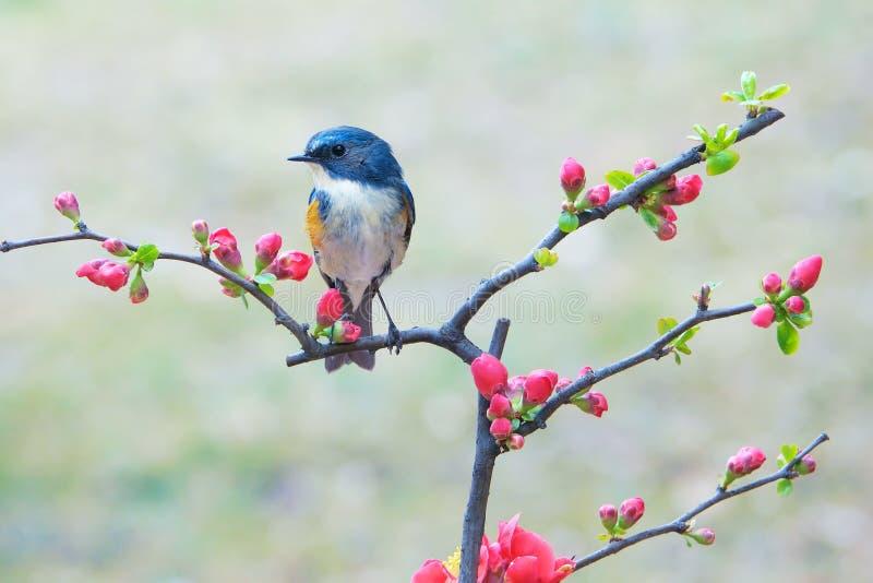 Uccello e fiore fotografie stock libere da diritti