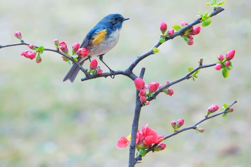 Uccello e fiore fotografia stock libera da diritti
