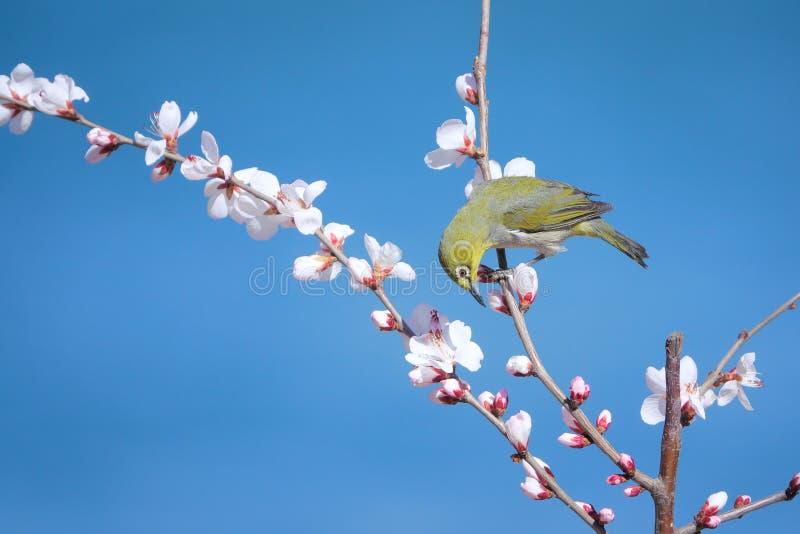Uccello e fiore fotografia stock