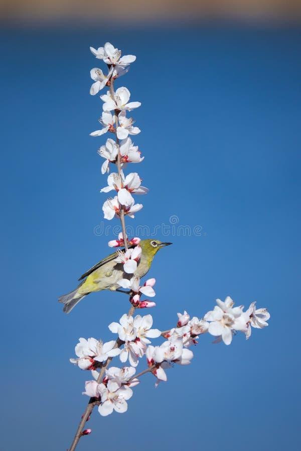 Uccello e fiore immagini stock