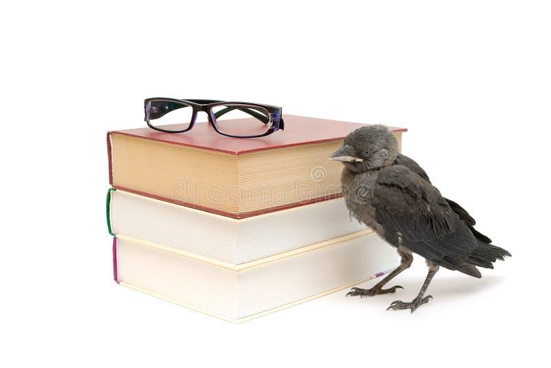 Uccello e libri isolati su un fondo bianco. foto orizzontale. immagine stock