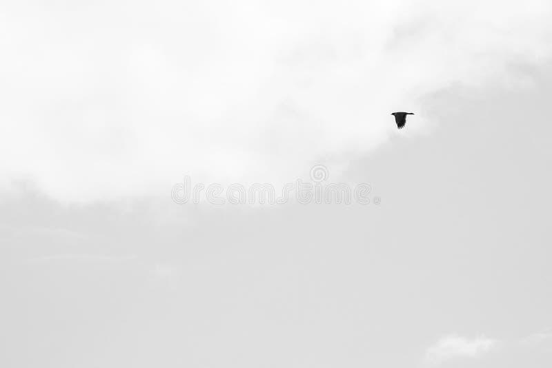 Uccello e nuvole fotografie stock