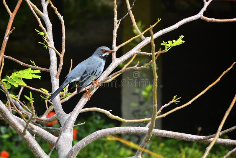 Uccello esotico fotografie stock