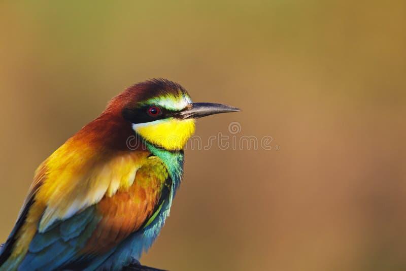 Uccello esotico all'alba fotografia stock