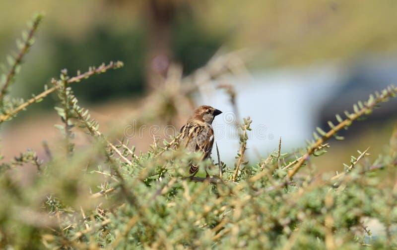 Uccello fra i rami del cespuglio fotografia stock libera da diritti