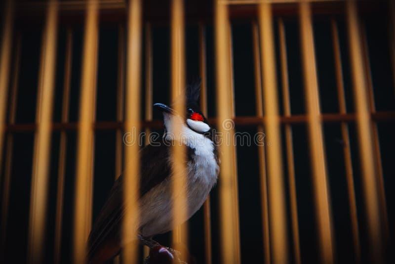Uccello ingabbiato impotente fotografie stock