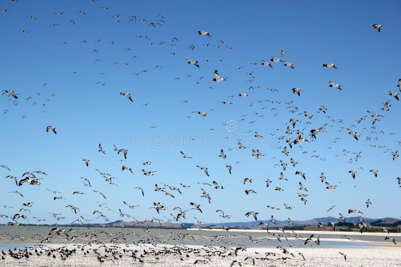 Uccello migratore fotografie stock libere da diritti