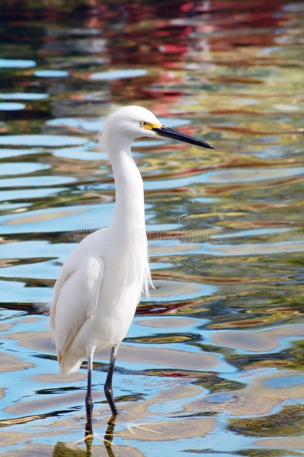 Uccello migratore della gru immagine stock libera da diritti