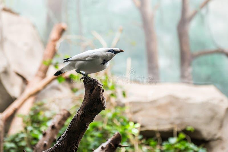 Uccello minuscolo esotico immagini stock libere da diritti