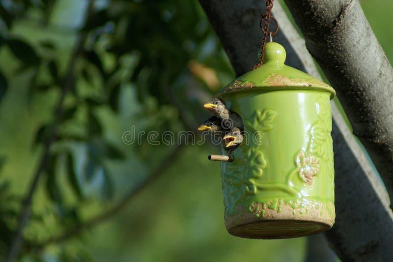 Uccello nei colori differenti fotografia stock libera da diritti