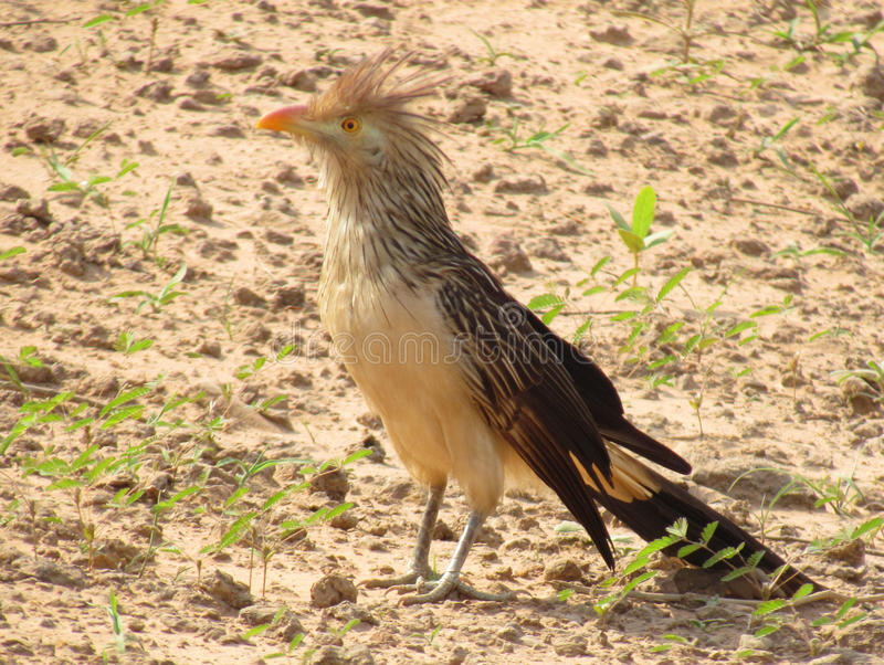 Uccello nel campo fotografia stock