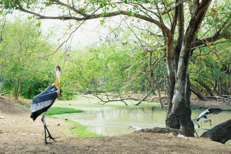 Uccello nel safari fotografie stock libere da diritti