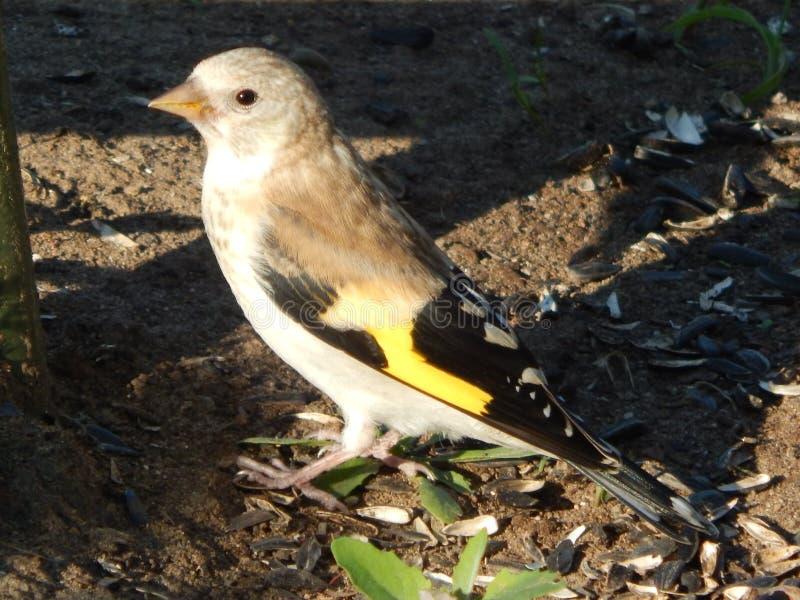 Uccello nel selvaggio fotografia stock