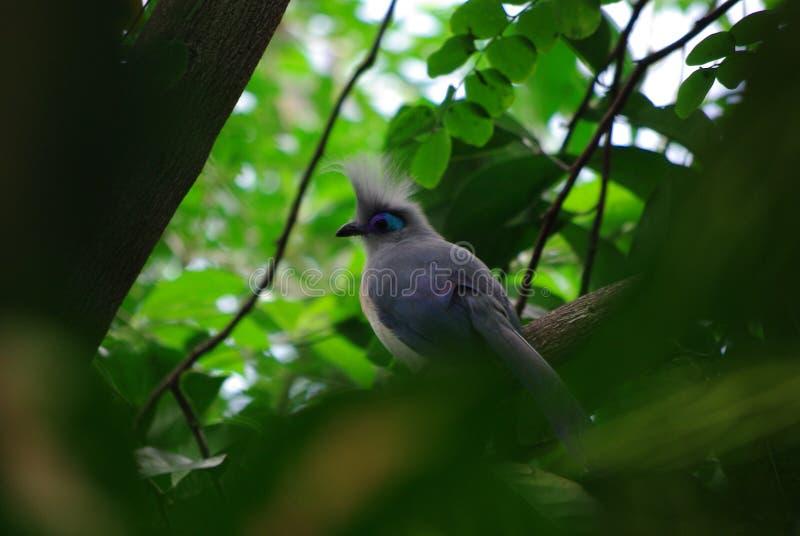Uccello nell'attesa immagini stock libere da diritti