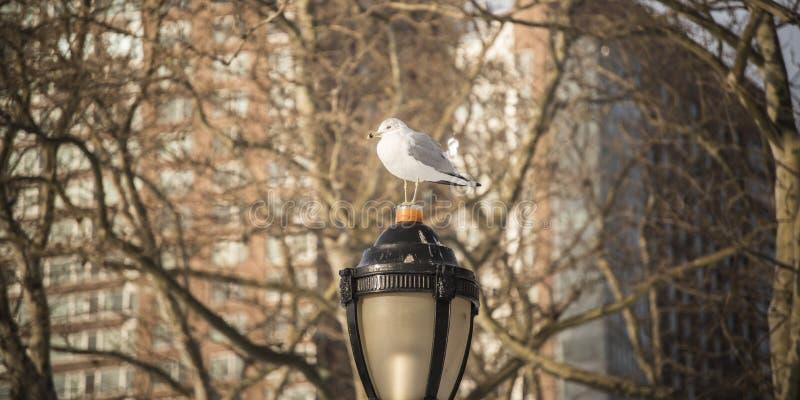 Uccello nella pace fotografia stock