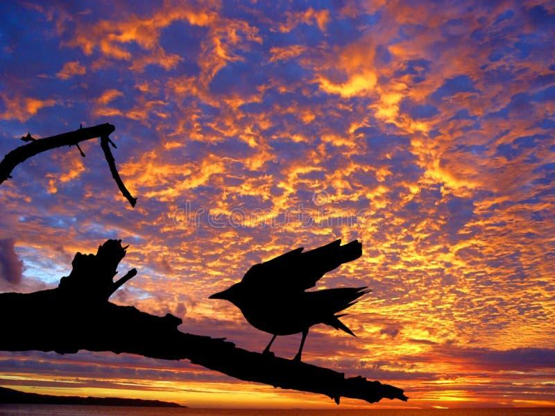 Uccello nero contro il tramonto fotografia stock