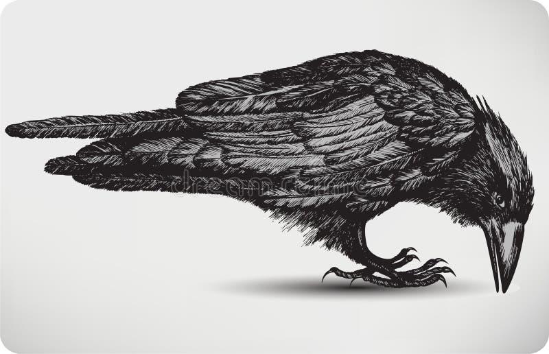Uccello nero del corvo, a mano disegno. Illustratio di vettore royalty illustrazione gratis
