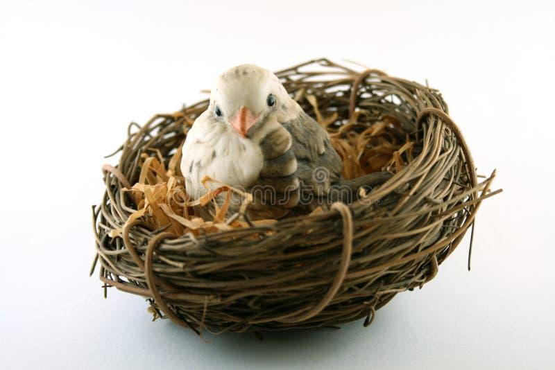 Uccello in nido immagine stock