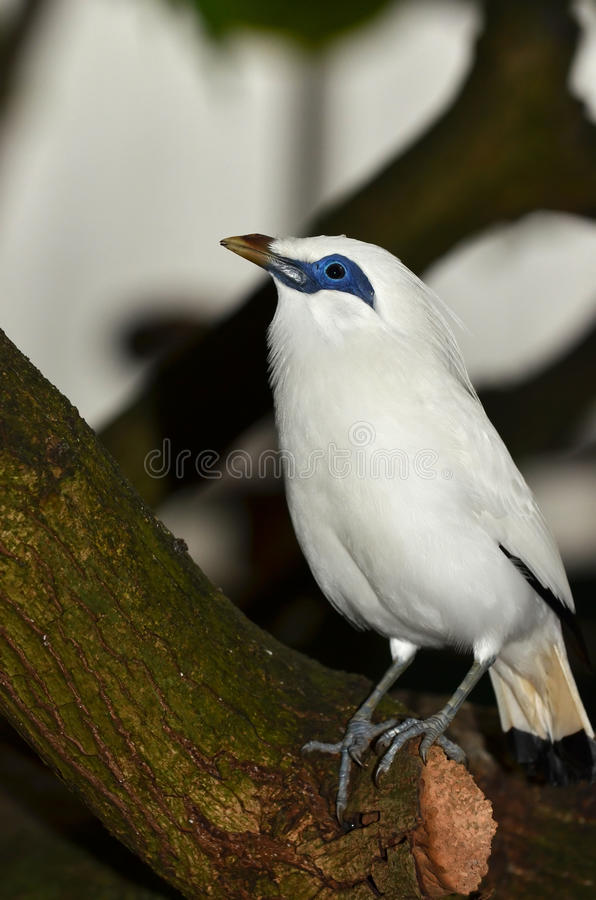 Uccello pericoloso fotografia stock