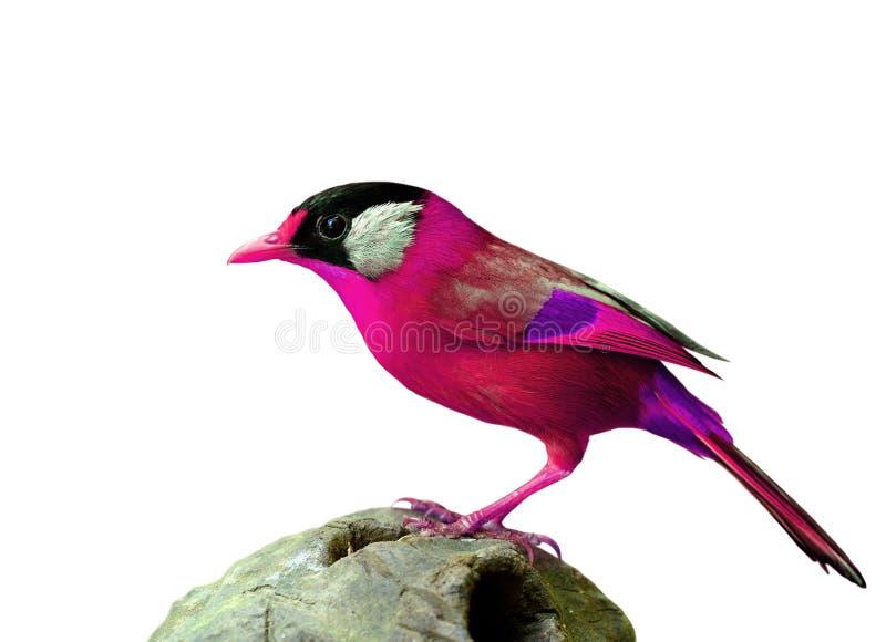 Uccello rosa operato di stupore fotografia stock