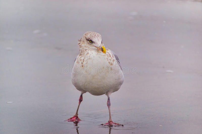 Uccello sassoso fotografia stock