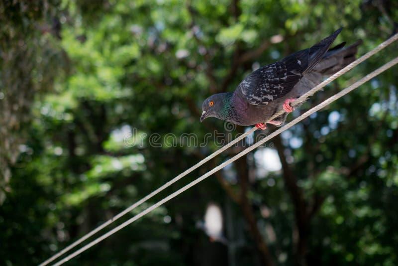 Uccello solo fotografie stock libere da diritti