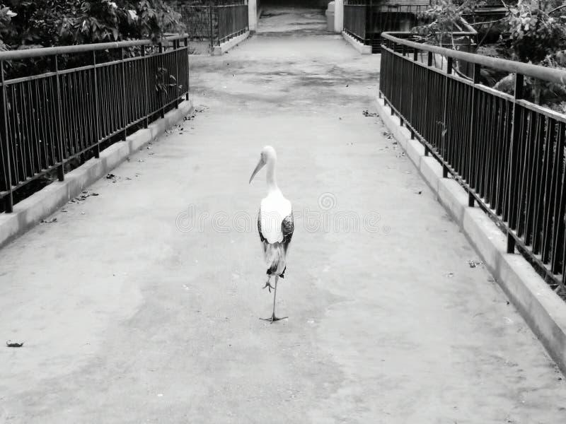 Uccello solo immagini stock libere da diritti