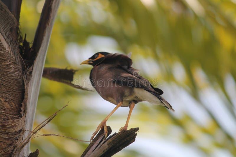 Uccello solo immagine stock libera da diritti
