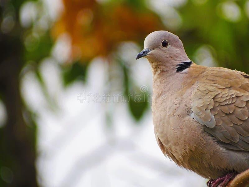 Uccello solo a Barcellona in primavera fotografie stock libere da diritti
