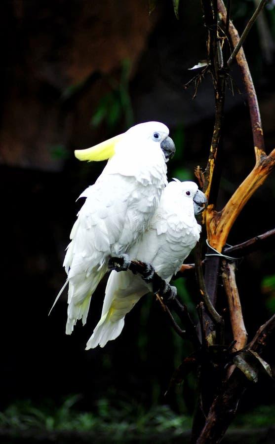Uccello stupefacente immagini stock