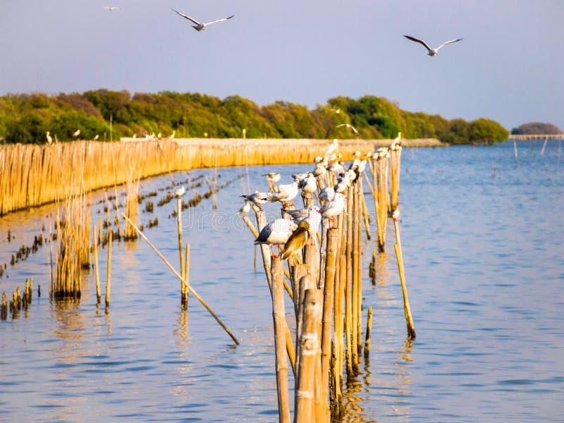Uccello su bambù asciutto nel mare fotografie stock libere da diritti