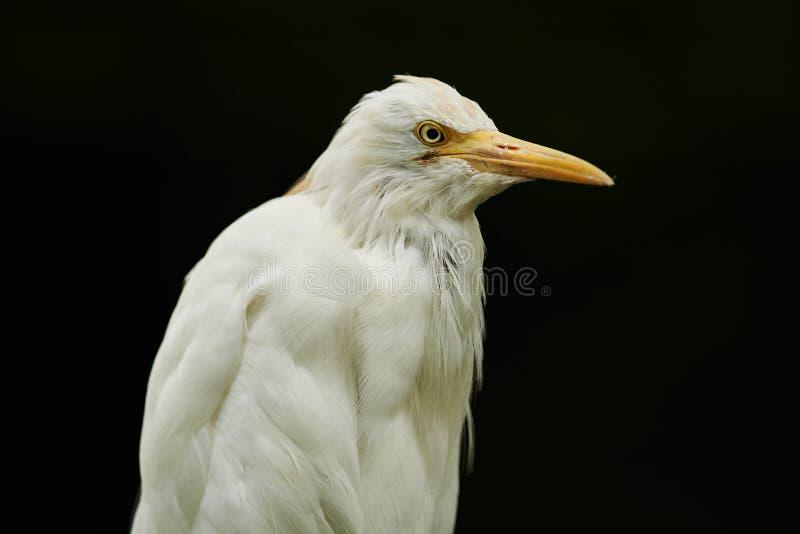 Uccello su fondo nero fotografie stock