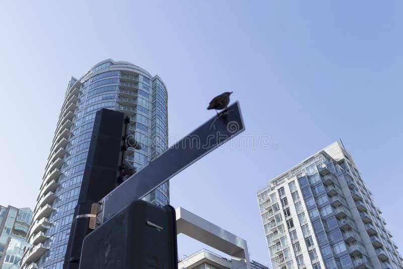 Uccello su streetcorner del centro immagini stock libere da diritti