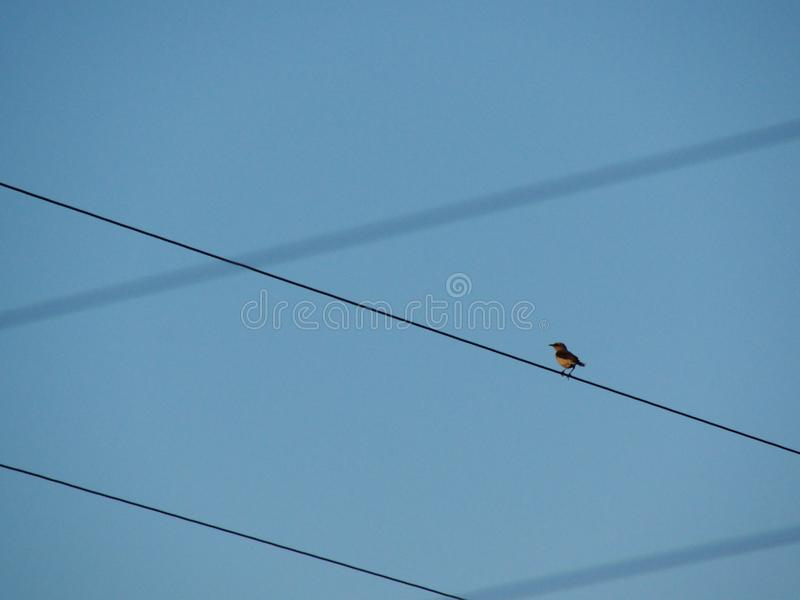 Uccello su un cavo fotografia stock libera da diritti