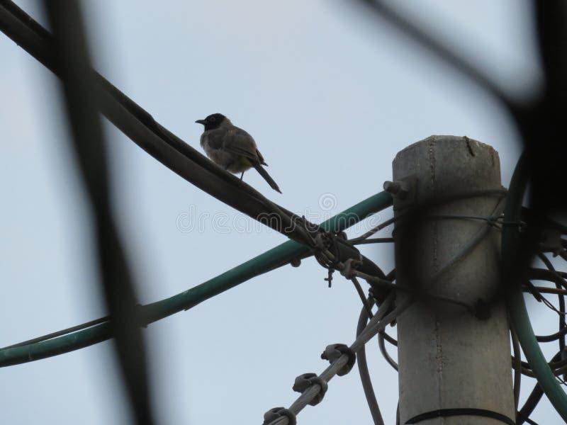 Uccello su un fench fotografia stock libera da diritti