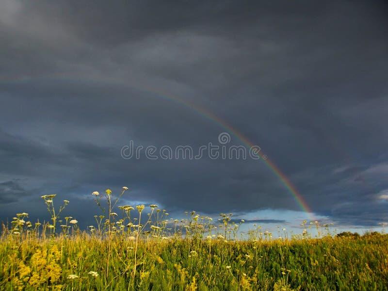 Uccello su un ponte celeste - arcobaleno immagine stock libera da diritti