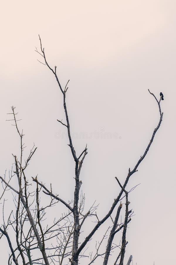 Uccello su un ramo fotografia stock libera da diritti