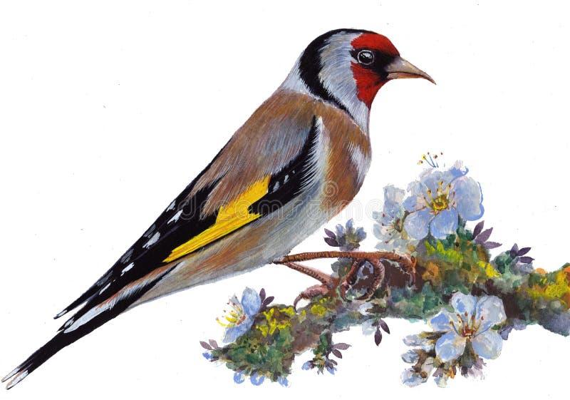 Uccello su un ramo di fioritura fotografia stock