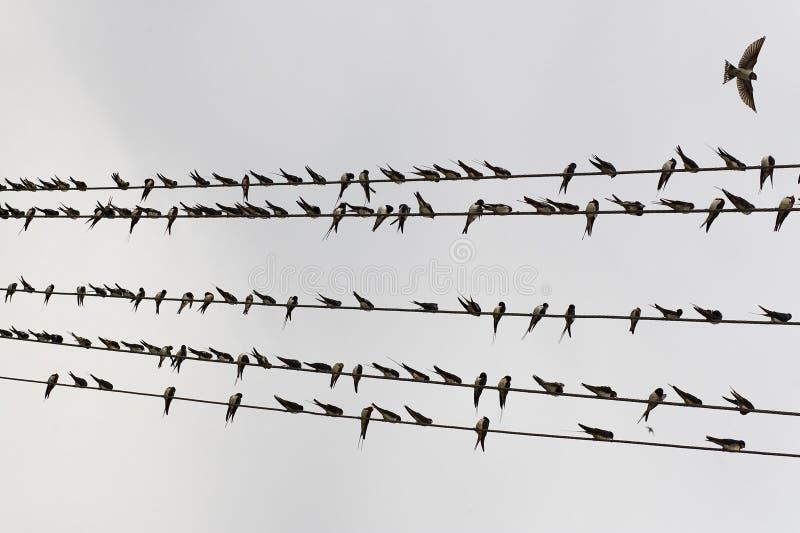 Uccello sul collegare immagini stock