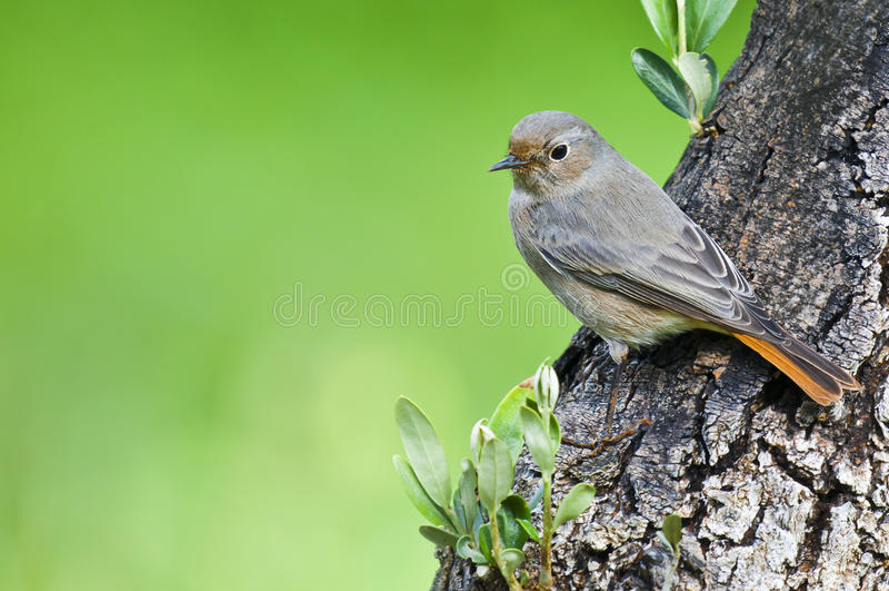 Uccello sull'albero fotografia stock libera da diritti