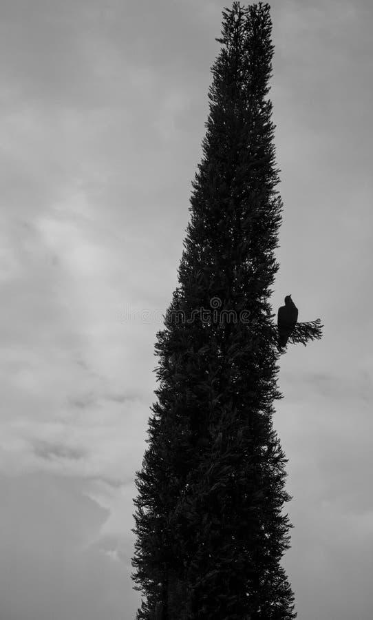 Uccello sull'albero immagine stock libera da diritti