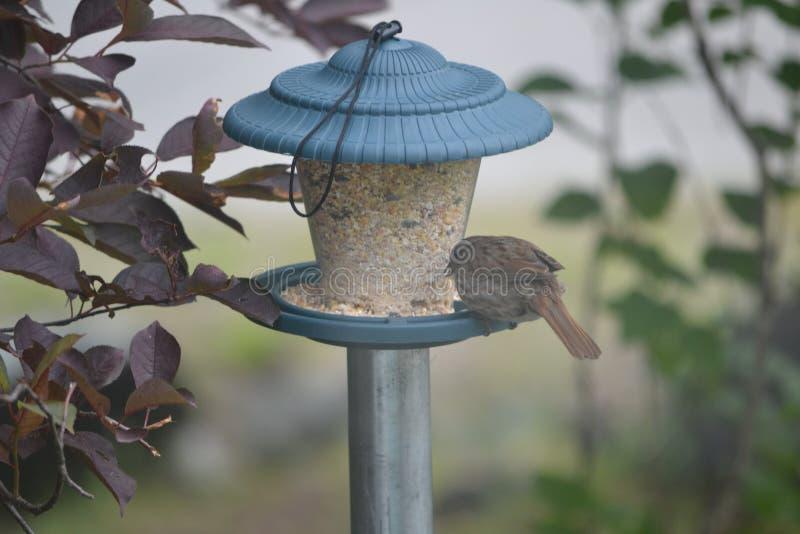 Uccello sull'alimentatore verde Palo del metallo immagini stock libere da diritti