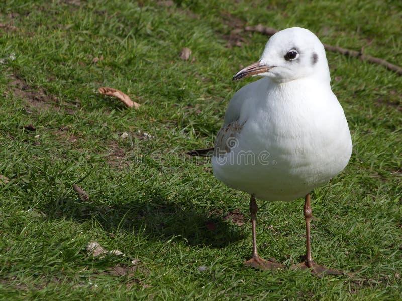 Uccello sull'erba fotografia stock