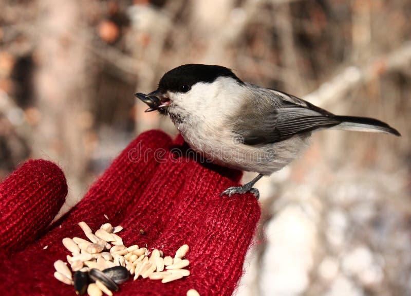 Uccello sulla mia mano immagini stock