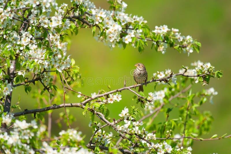 Uccello sulla molla fotografie stock